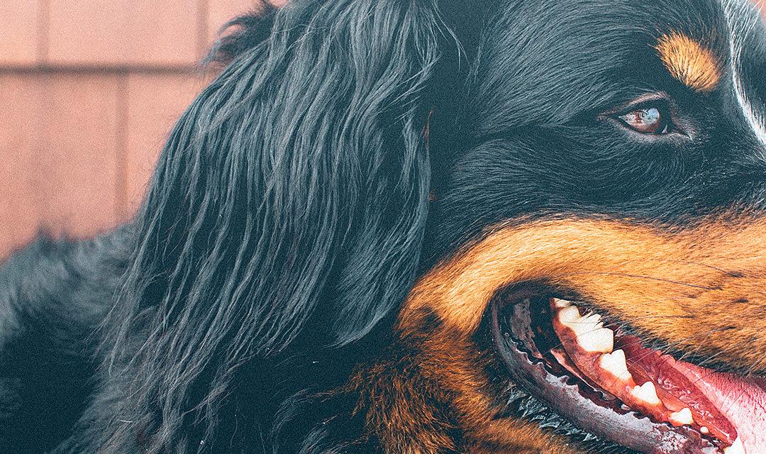 Registration Renewals for Dog Owners