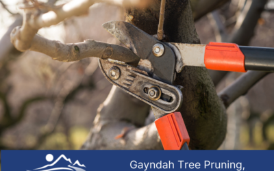 Gayndah Tree Pruning, Removal and Stump Grinding